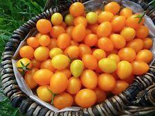 Gelbe Wildtomaten, Minitomaten, Gemüse Saatgut 20+ Samen aus Eigenanbau