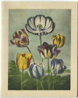 VINTAGE SHABBY FLOWERS TULIPS CHIC BOTANICAL STONE LITHOGRAPH PRINT ON NOTE CARD