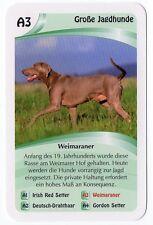 Dogs - Single German Trade Card Weimaraner Sporting Dog