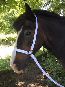 Pony /& Cob White Adjustable Welsh Show Halter Headcollar with Chain Lead