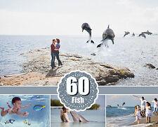 60 sea fish animals Photo Overlays, clip art clipart, scrapbooking photo overlay