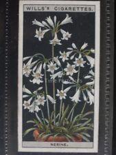 No.35 NERINE - Flower Culture in Pots - Wills Ltd 1925