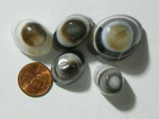 Eye Agate 325 Carats 5 Cabs Showing Interesting Eye Shape Cabs Black And White