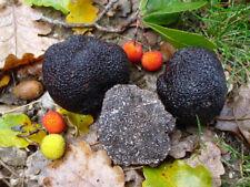 20 g Fresh BLACK TRUFFLE Tuber melanosporum Mycelium Buy Mushroom Spawn Spores
