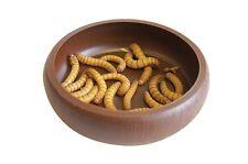 Komodo Reptile, Meal Worm Dish, Mealworm Wax Worm Dish, Super Worm Dish  8cm dia