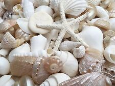 WHITE & PEARL SHELLS 500 gr For Craft Project,Wedding,Home, Aquarium Decoration