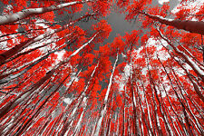 STUNNING ABSTRACT FOREST LANDSCAPE #364 CANVAS PICTURE WALL ART A1