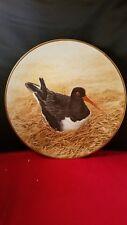 """Danbury Mint 12 Waterbird Plates """" Oyster-Catcher """" Plate 9 1/2""""d"""
