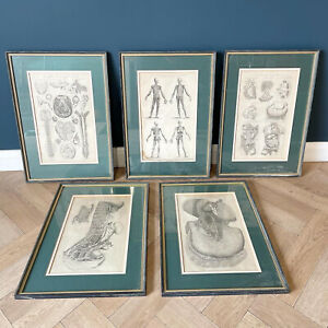 Antique Anatomical Engravings Print Poster Chart Curiosity Skull Heart And Bones