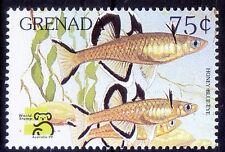 Honey blue eye, Fish, Marine Life, smallest threatened species, Grenada MNH -F19