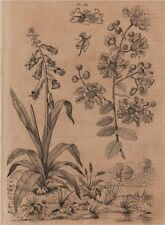 PLANTS. Lachenalia. Lagerstroemia 1834 old antique vintage print picture