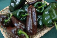 Ancho Poblano Chile Pepper Seeds, Chili, NON-GMO, Variety Sizes, FREE SHIPPING