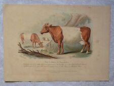 Lithographie XIXème Couleur et Gommée - Vaches - Animaux - Hermann Eichens