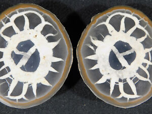 A Neat Pattern! On This Natural Polished SEPTARIAN Nodule 201gr