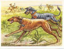 Rare 1952 Dog Art Print Austria Tobacco Company Bildwerk Card Arabian Sloughi