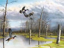 Jim Hansel Backwater Woodies Duck Art Print 16 x 12