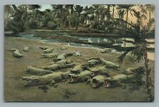 """Krokodile—Crocadile—Crocodile"" Antique PCK Animal African UDB 1109 Postcard <19"