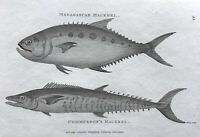 1803 Shaw SCARCE COPPER PLATE ENGRAVING: Madagascar & Commerson's MACKREL FISH