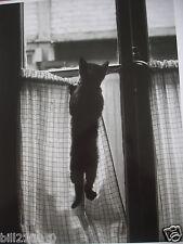 album di 20 fotografie di gatti . gatti . 35 X 29,5 cm . Edizioni di Tana
