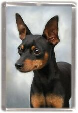 Miniature Pinscher Fridge Magnet No 3 by Starprint - Auto combined postage