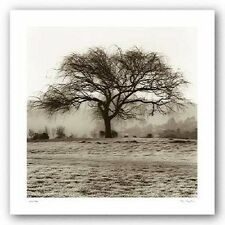 ART PRINT Willow Tree Alan Blaustein