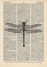 Dragonly 2 Dictionary Illustration Art Print Vintage Zoo Insect Entomology