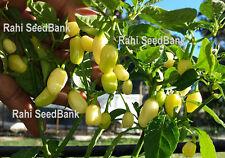 Habanero Peruvian White - 10 Seeds - Heavy Yield & Extremely hot Chilli