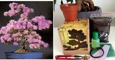 Arbre de judée bonsai kit, mega kit-sol/pots/graines 2x/fil/engrais/maille/tweezer