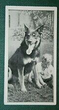 ALSATIAN & Child   Vintage Photo Card