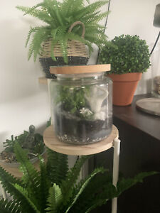 Beautiful Tall Glass Terrarium with Living plants perfect for home decor