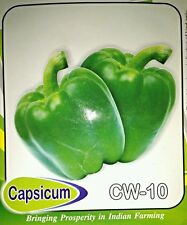 Capsicum 30 Seeds All Pincode Shipping