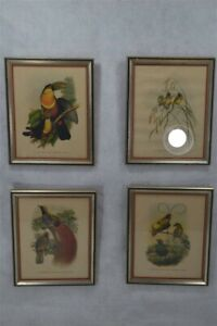 framed prints birds set 4 colored 8x10 silver frame very good period 19th c 1800