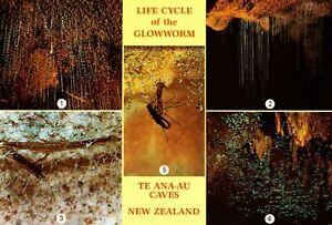 AK: Life Cycle of the Glowworm te Ana-Au Caves New Zeakand