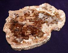 Scheibe versteinertes Holz Madagaskar 216,2g 120x90x12mm Kamin-Ofen-Deko