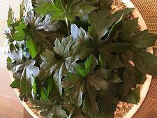 Bitter Melon(Karela) Leaves:Ship Fresh Picked, 25 gm. 100% Organic. CA-USA Grown