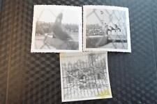 Unusual Vintage Photos Animals w/ Chain Link Filter 870