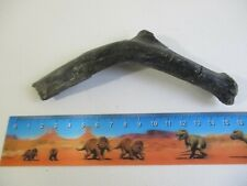 More details for iguanodon dinosaur fossil partial rib bone isle of wight uk 145mm 106g gift ba72