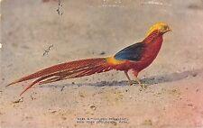 POSTCARD  ANIMALS   BIRDS   PHEASANT