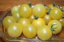 Snow White Cherry Tomato 10+ seeds