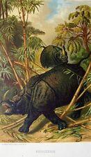 Louis Prang Chromolithograph 1885 Rhinoceros