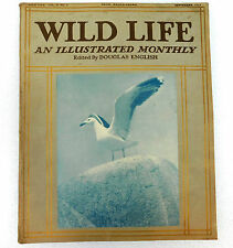 Wild Life illustrated magazine Douglas English Sept 1913 avocet glow worm photos