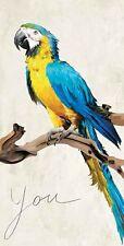 Teo Rizzardi: You Keilrahmen-Bild 35x70 Leinwand Papagei Vögel Ara