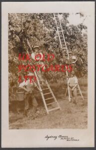 Kent -  WHITSTABLE, Group of Apple Pickers,  Real Photo by Sydney Amos