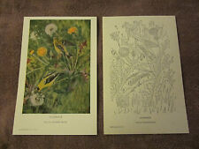 3 VINTAGE Birds: Goldfinch, Mourning Dove, Sparrow - National Audubon Society
