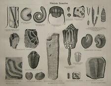 1873.Orig_Xilo-Woodcut_SILUR FORMAZIONE.Meyers.Konv.Lex