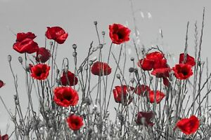 Red Poppies Grey Background  CANVAS WALL ART DECO LARGE READY TO HANG all sizes