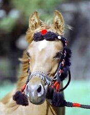 NATIVE Arabian Dance & Show Halter w/ Beads SADDLE TACK