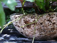 10 Lbs Gray Hypertufa Fern Formula Mix-DIY- beautiful Pots-FREE Soil! PsNature