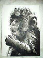 Canvas Painting Monkey B&W Art 16x12 inch Acrylic