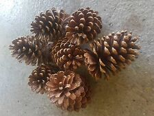 5 to 8 Large Real Pine cones Decorations wedding table Christmas upto 200 Grams
